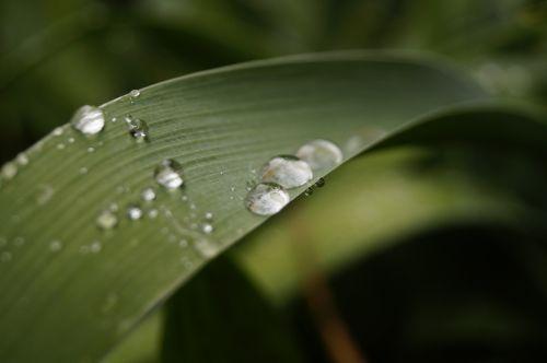tiesiog pridėti vandens, liūtys, po lietaus, lietus, lapija, žalias, gamta, žalias lapas, sodas