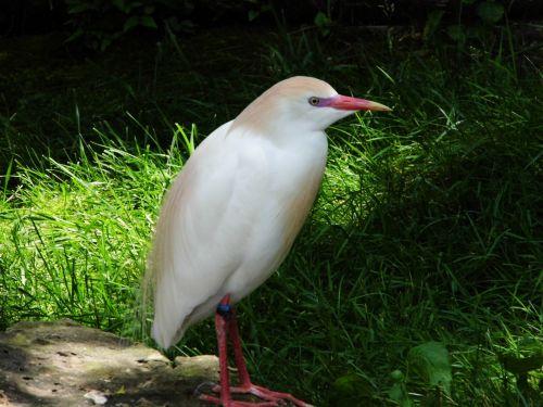 K C Zoo Bird 2