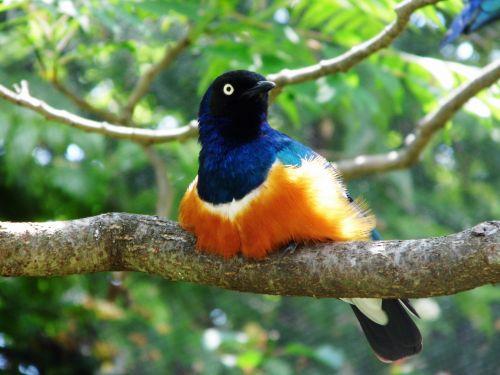 K C Zoo Bird On Branch