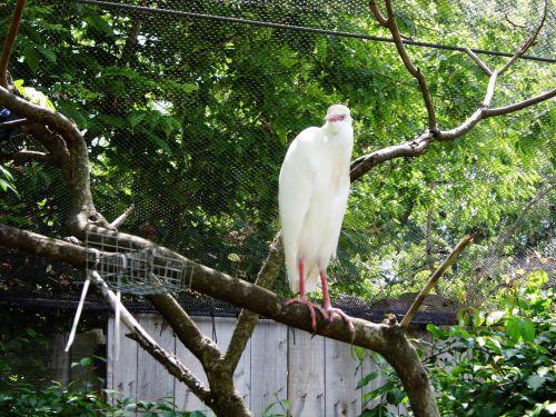 K C Zoo Bird X