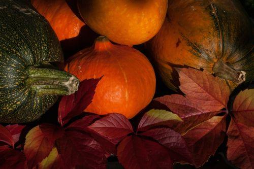 kabocha cucurbita maxima pumpkins