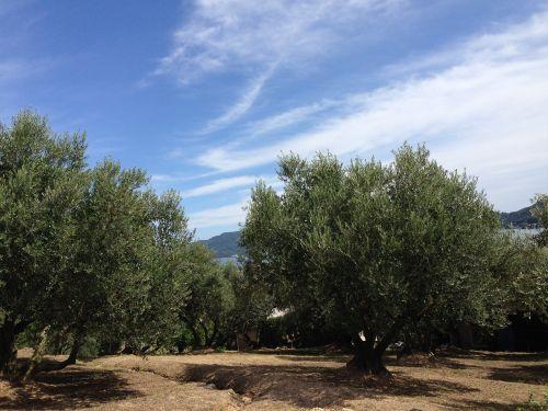 kagawa prefecture shodoshima olive garden