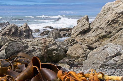 kaikoura,kaikoura pakrantė,pietų sala,Naujoji Zelandija,jūra,vandenynas,kelpimas,jūros dumbliai,akmenys,vanduo,gamta,Krantas,pakrantė,pajūryje
