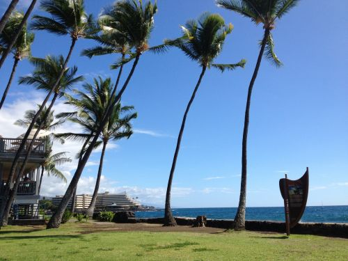 didelis & nbsp, sala, Hawaii, vandenynas, jūra, saulėtas, delnas, papludimys, atogrąžų, kailua kona hawaii 2