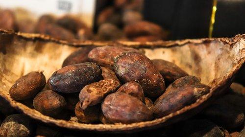 kakaobean  kakao  chocolate