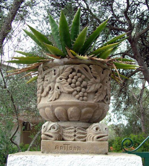 kaktusas, Rokas, puodą, papuošalai, kaktusas