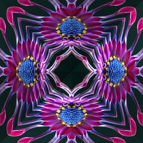 Kaleidoscope African Daisy
