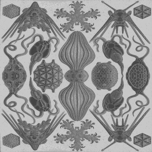 Kaleidoscopic Animals