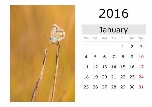 Calendar - January 2016 (English)