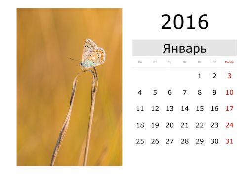 Calendar - January 2016 (Russian)