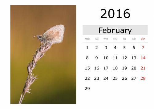 Calendar - February 2016 (English)
