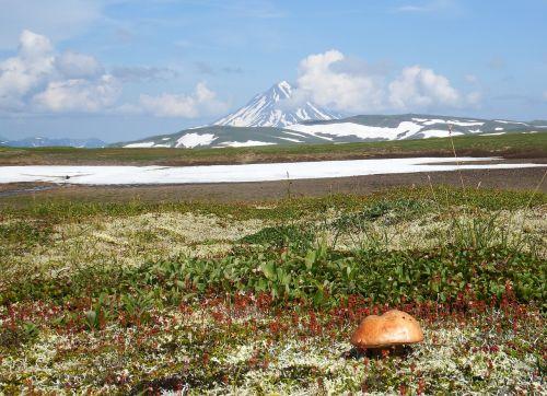 kamchatka,kalnų plynaukštė,grybai,tundra,vulkanas,sniegas,vasara,Rugpjūtis,kalnai,krūmas,atvira erdvė,keliai,aukštis,kraštovaizdis,gamta,kelionė,upė,highlangs,keliauti,keliauti,turizmas,gėlės,saulėlydis,vakarinis dangus,vasaros diena,krūmai,off-road