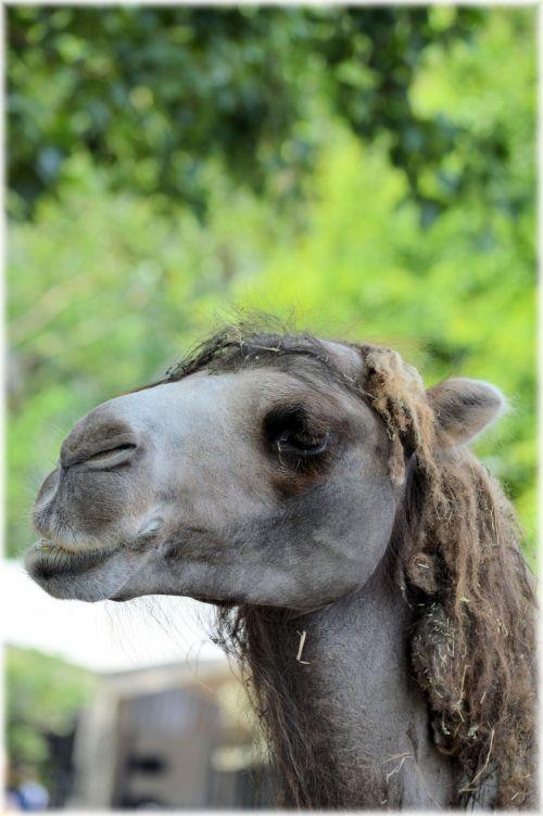 Camel - Hey, Bob Marley