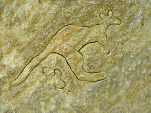 kangaroo art rock engraving