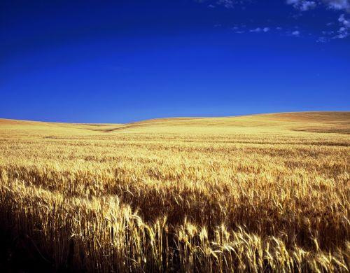 kansas farm scenic