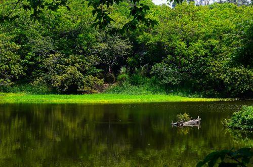 kaohsiung niao song i manage woodland