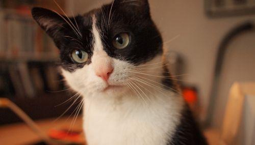 kat kitten face