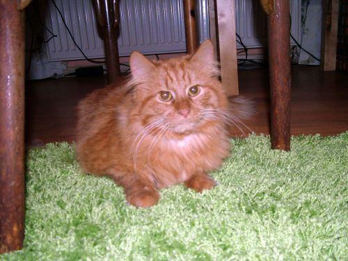 Cat Samson