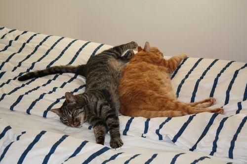 kattesøvn cat casual
