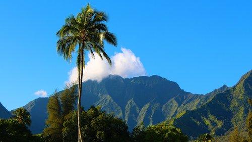 kauai  hawaii  hanalei