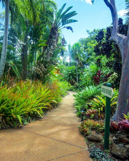 kauai hawaii botanical garden