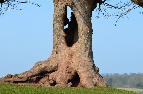kedleston hall hollow tree autumn