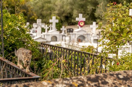 cemetery cat feline