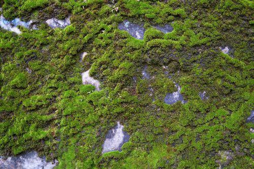 kennedy rocky moss