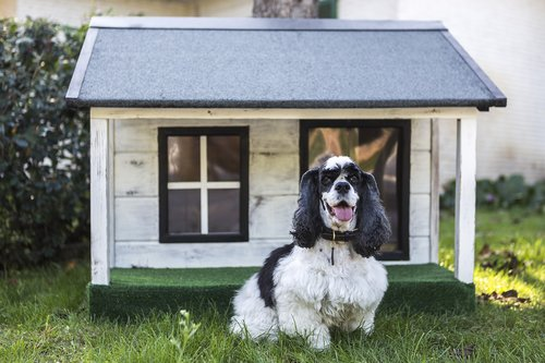 kennels for pets  dog houses  wooden houses for dogs
