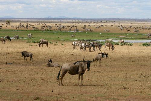 kenya safari wild animals