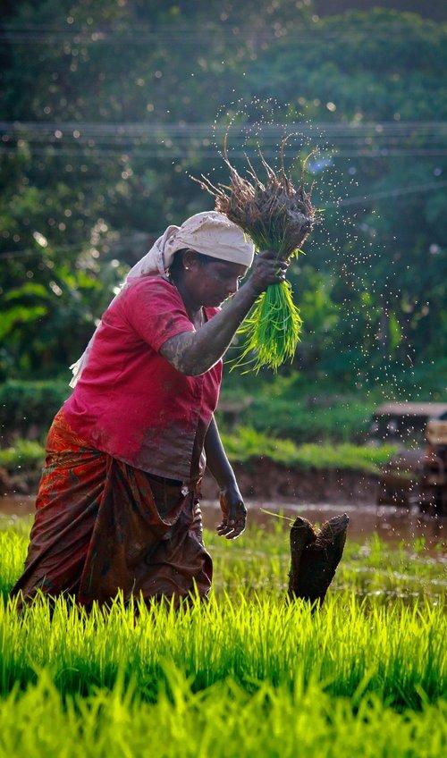 kerala  outdoor  cultivating