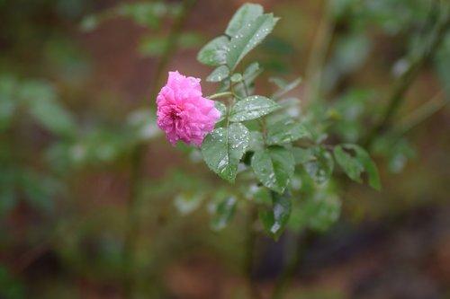 kerala  greenery  flowers