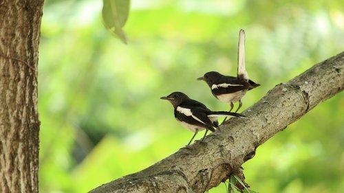 kerala  india  bird