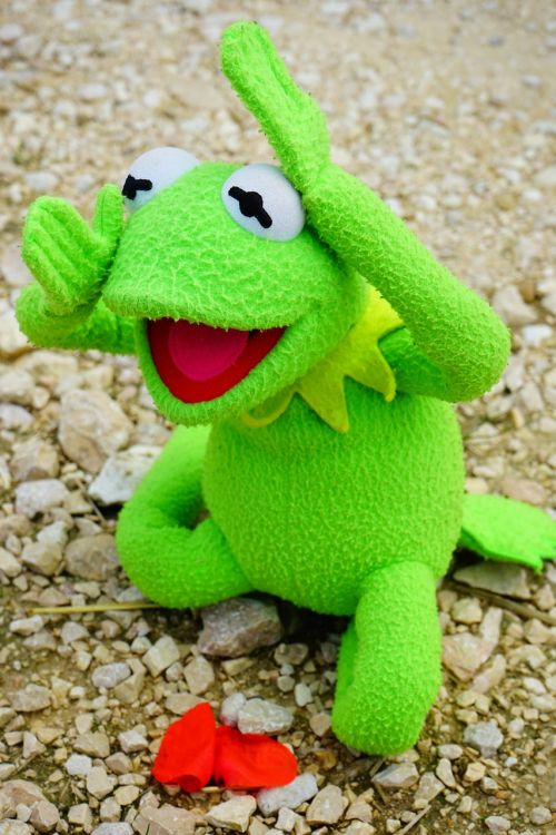 kermit frog blossom