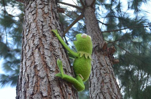 kermit rene green