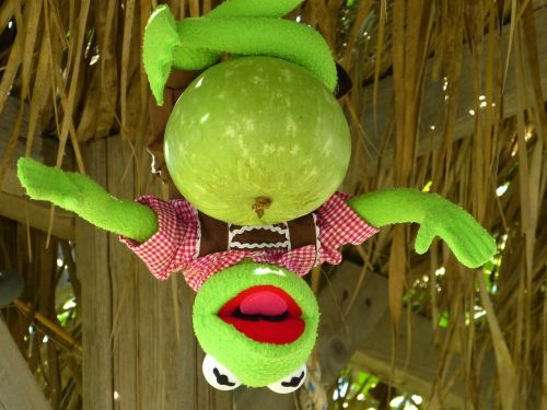kermit frog calabash