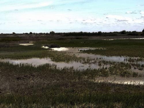 Kern Wetlands