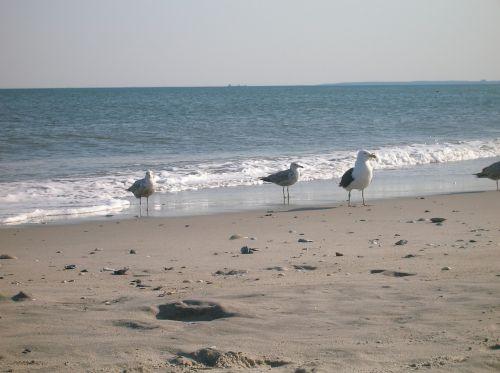 kerstin mais rockaway beach queens