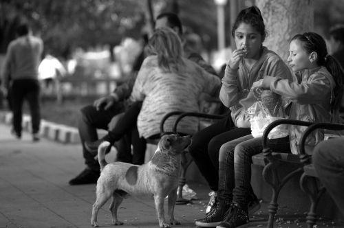 kids dog street