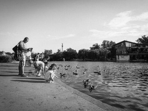 kids children ducks