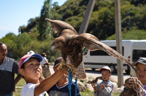 kids  falcon  eagle