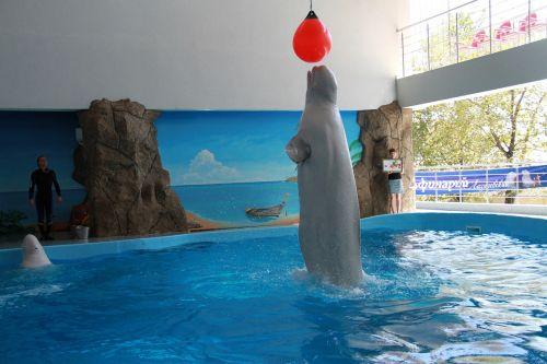 killer whale dolphinarium tricks