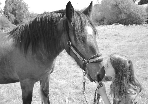 kiss horse girl