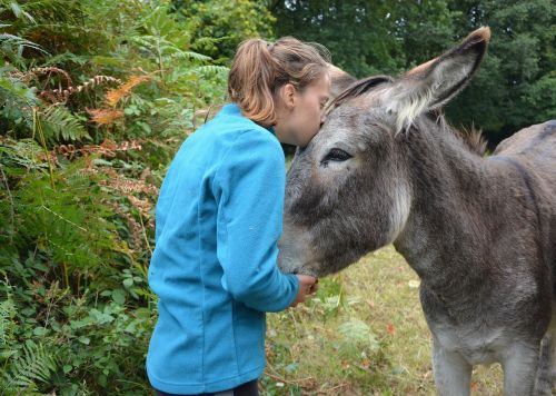 kiss donkey girl
