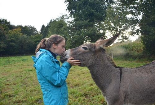 kiss girl donkey