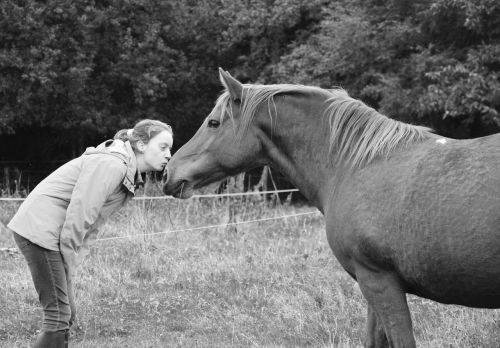 kiss kisses young girl young woman horse