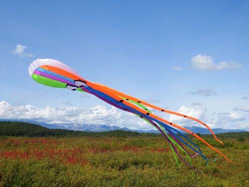 kite octopus sky