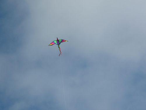 kite sky bird