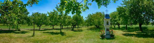 kitsee sets trees
