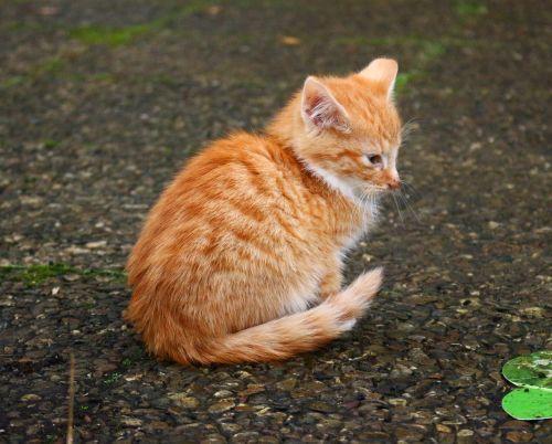 kitten cat cat baby